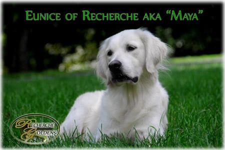 Maya_Available_Pup