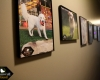 Our Alumni Wall features pictures of our previous white golden retriever puppies who have graduated from our Training Institute