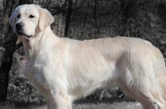 Pippa-new-featured