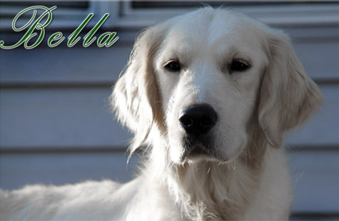 Bella-new-featured