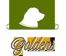 Recherche Goldens