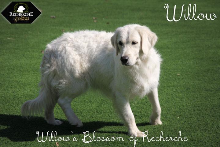 Willow_Oct15_3295
