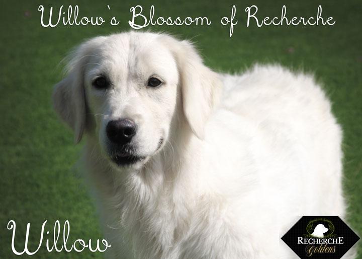 Willow_Oct15_3302