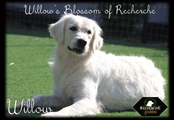 Willow_Oct15_3319