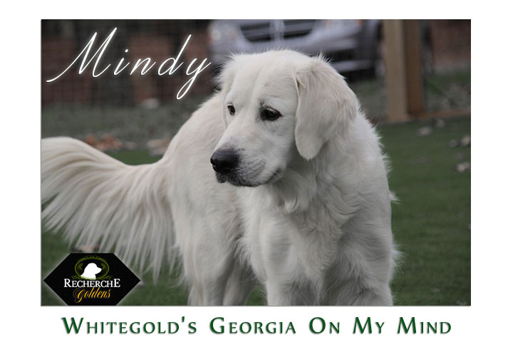 featured_mindy