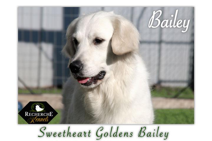 Bailey_TrixiePups_7940