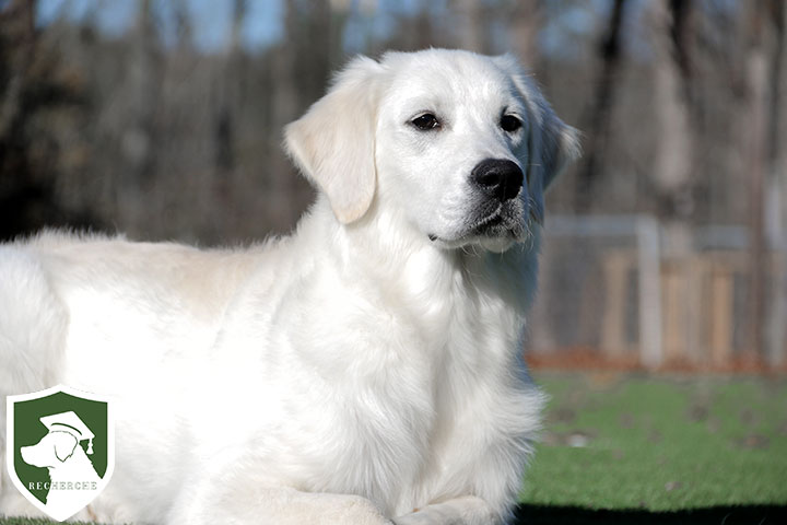 "SOLD! ""Finley""- Extensively Trained CGC Abbie & Amos Boy"