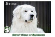Ethan – Stud