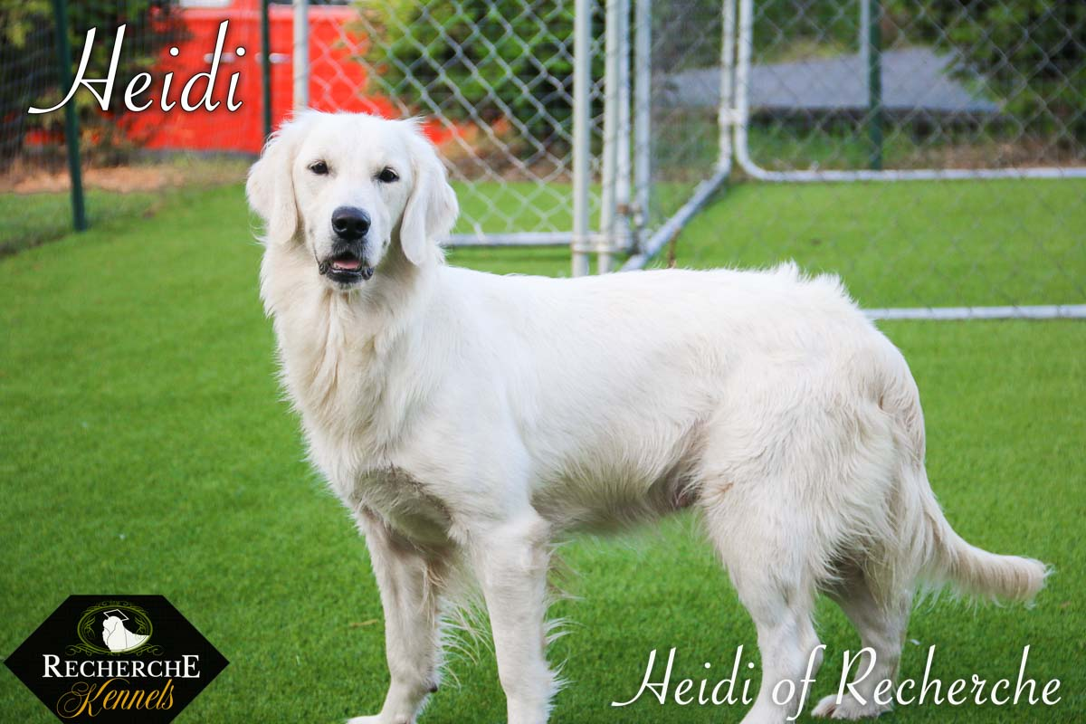 Heidi-14