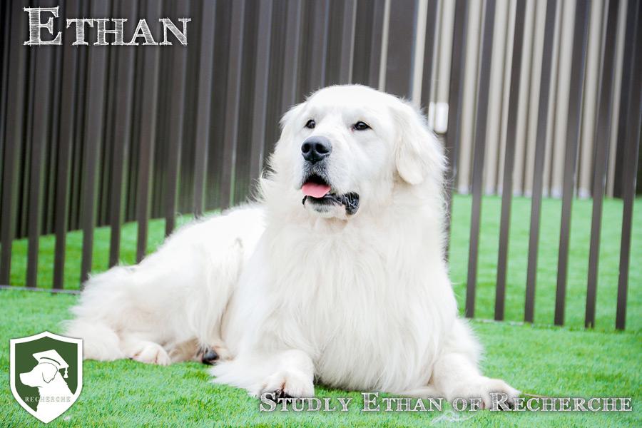 Ethan-21