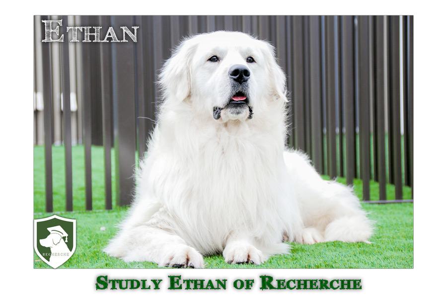 Ethan-47