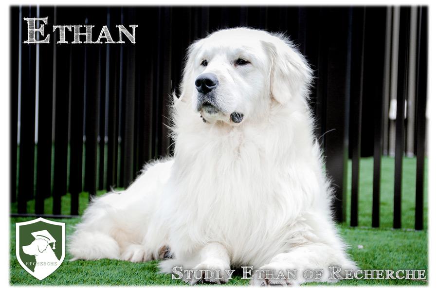 Ethan-48