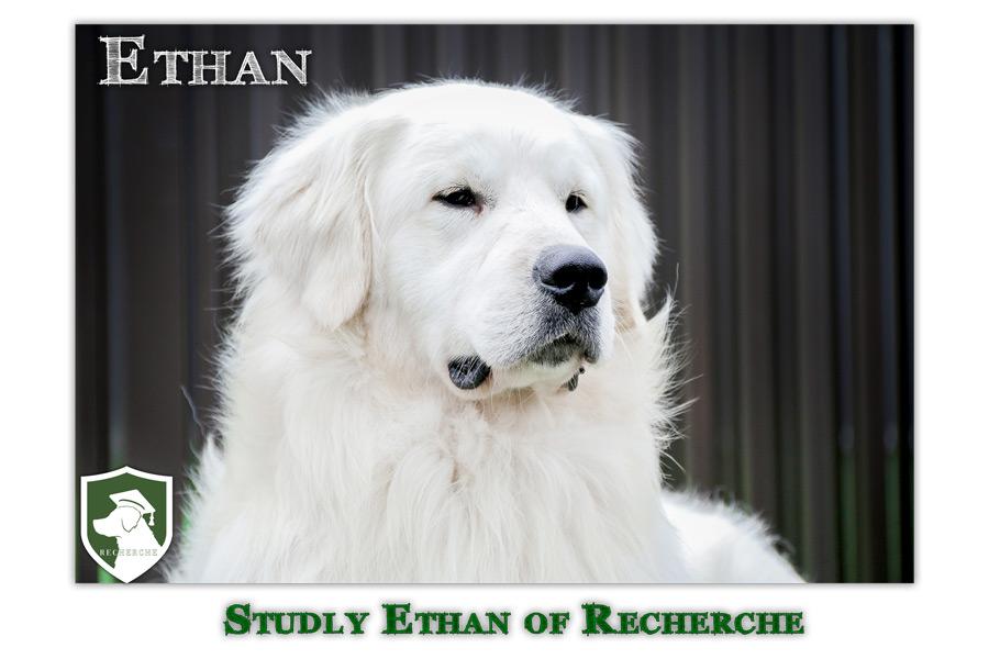 Ethan-50