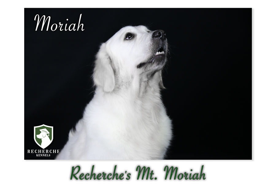 Moriah-21