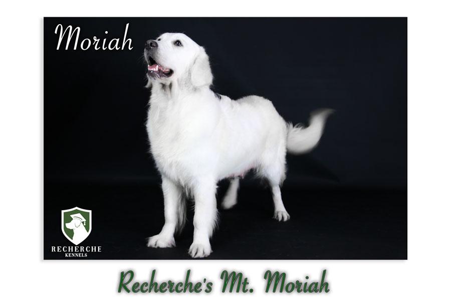 Moriah-31