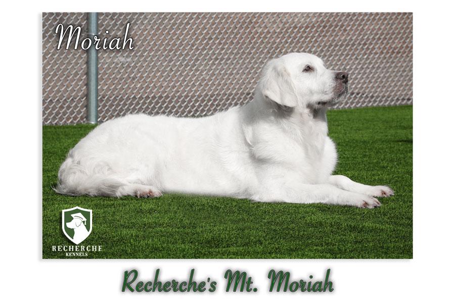 Moriah-60