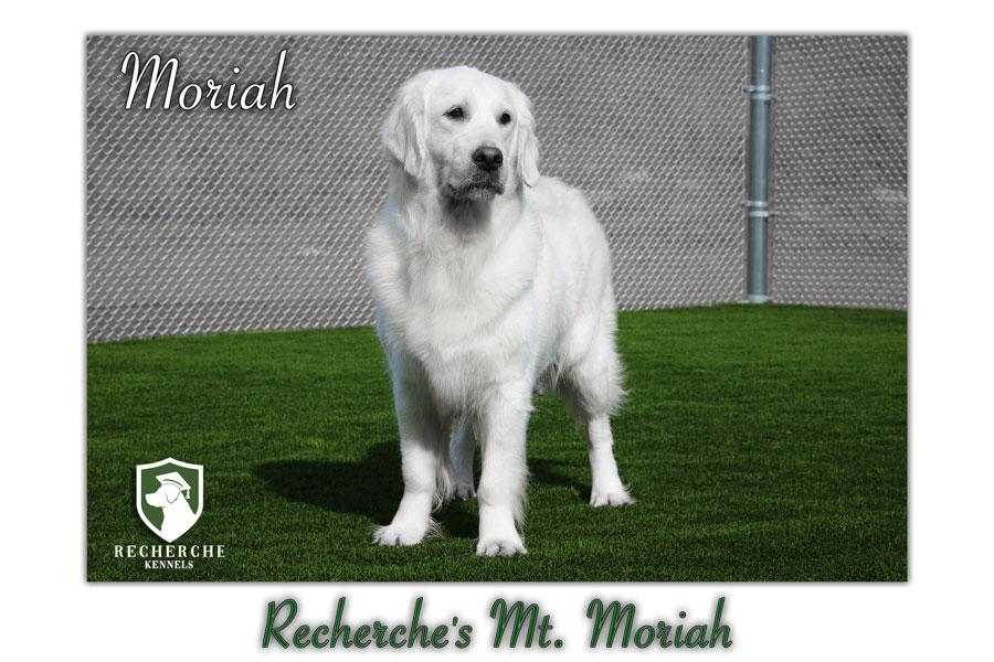 Moriah-81