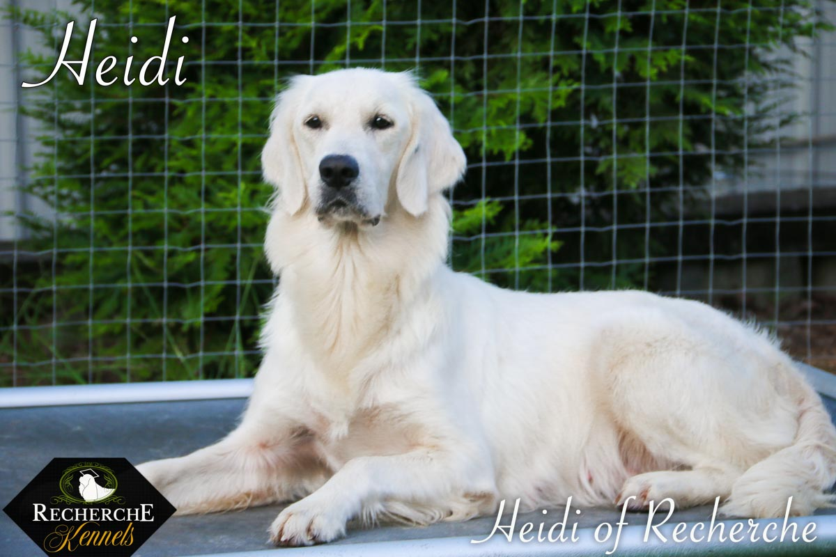 Heidi-5