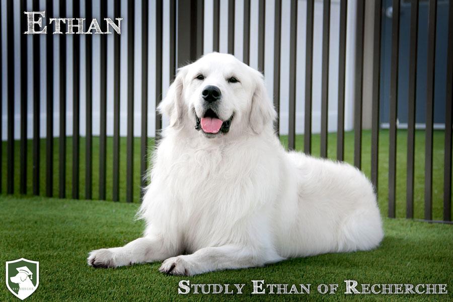 Ethan-1