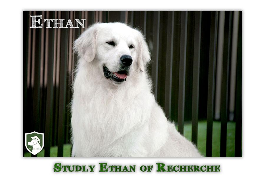 Ethan-18