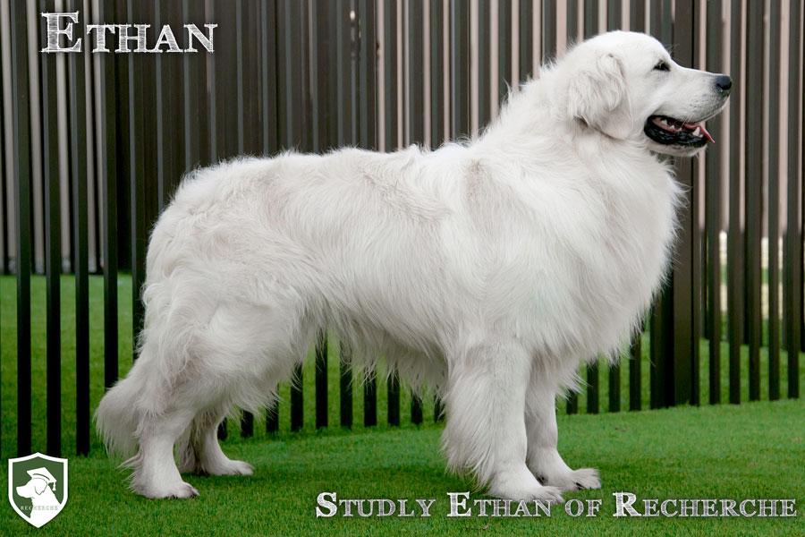 Ethan-22
