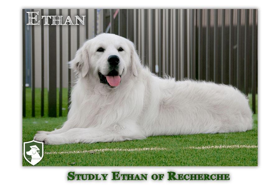 Ethan-28