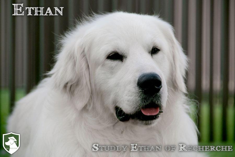 Ethan-32