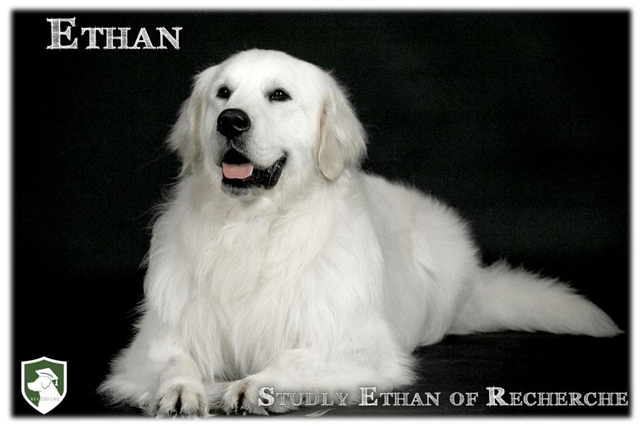 Ethan-36
