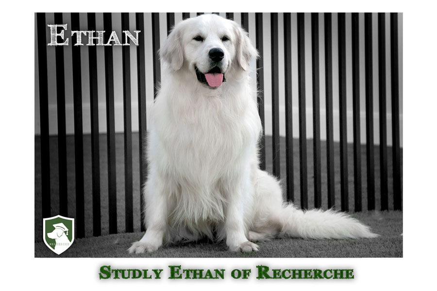 Ethan-6