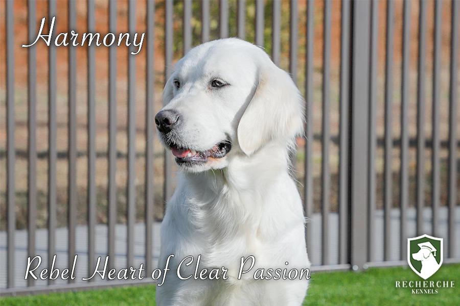 Harmony_Web14