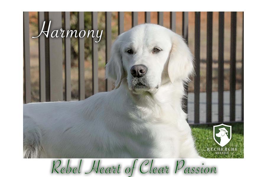 Harmony_Web6