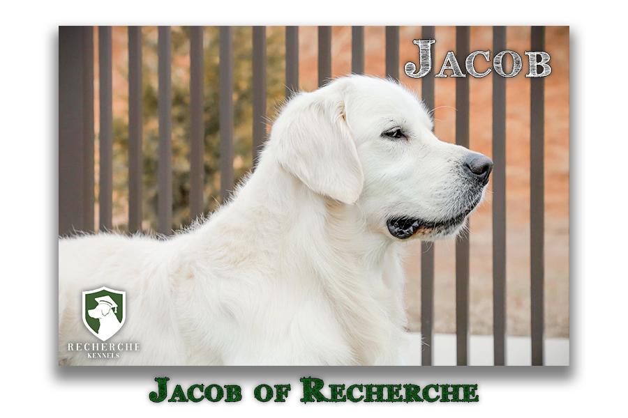 Jacob_Web2