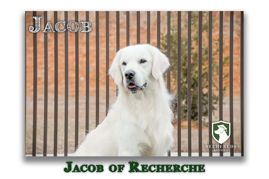 Jacob_Web3