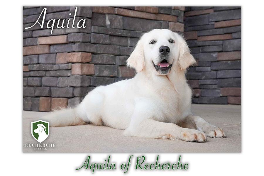 Aquila_Web 1