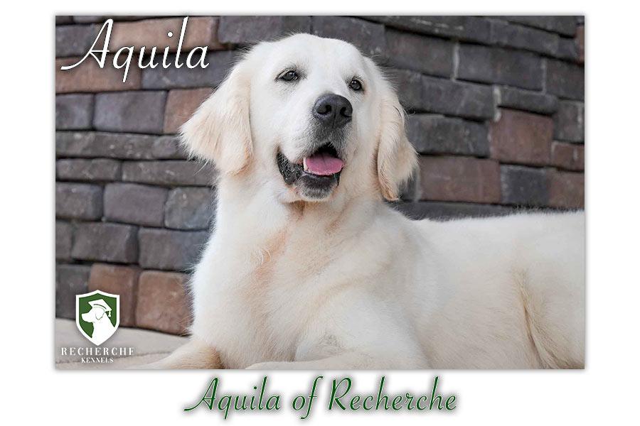 Aquila_Web 3