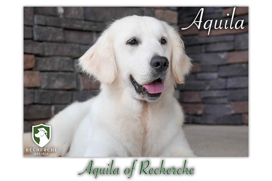 Aquila_Web 4