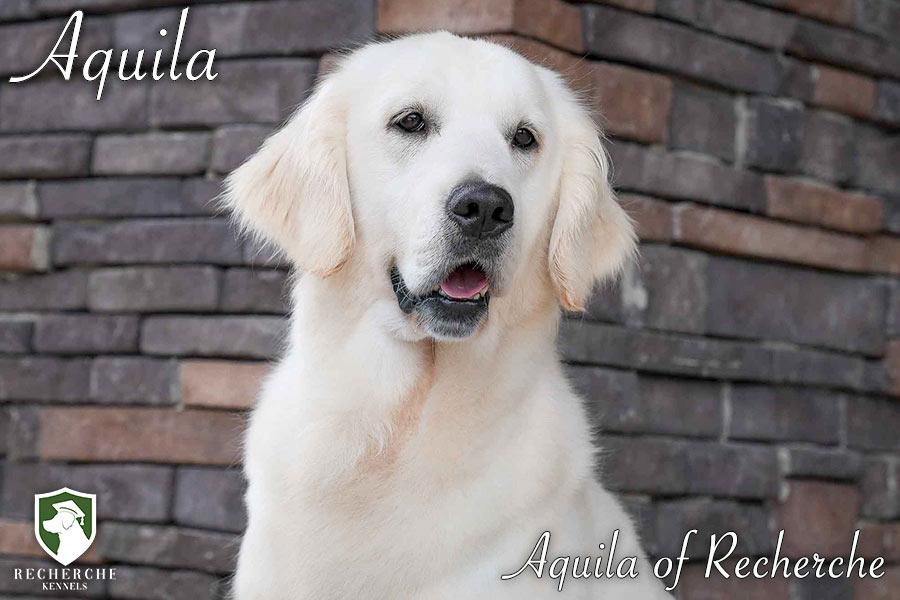 Aquila_Web 6
