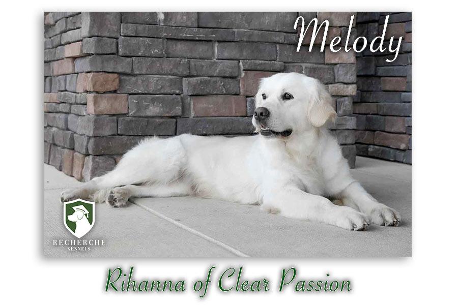 Melody_Web 5